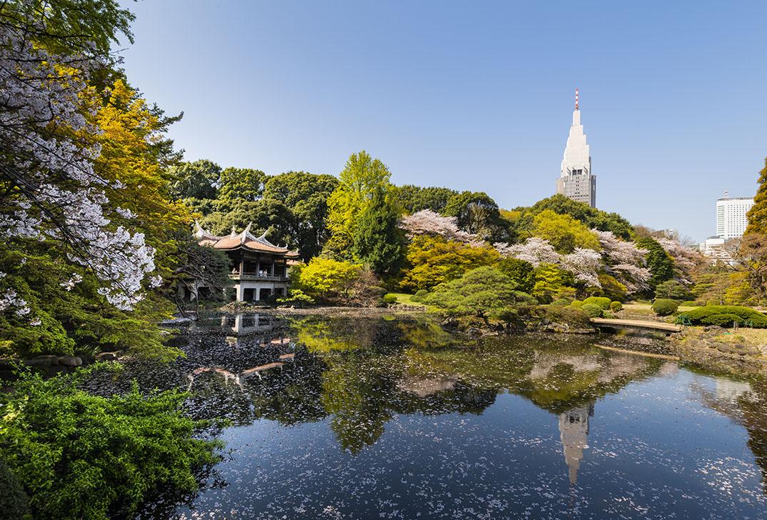 shinjuku-gyoen-tokyo-japan