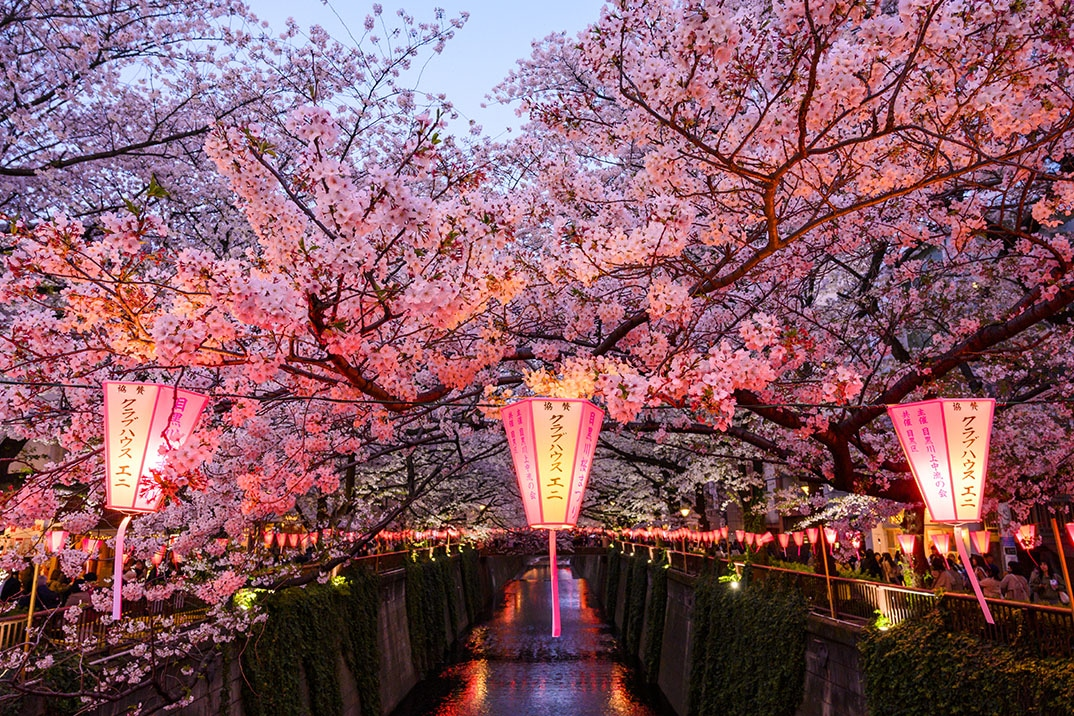 meguro-river-tokyo-japan-cheery-blossom