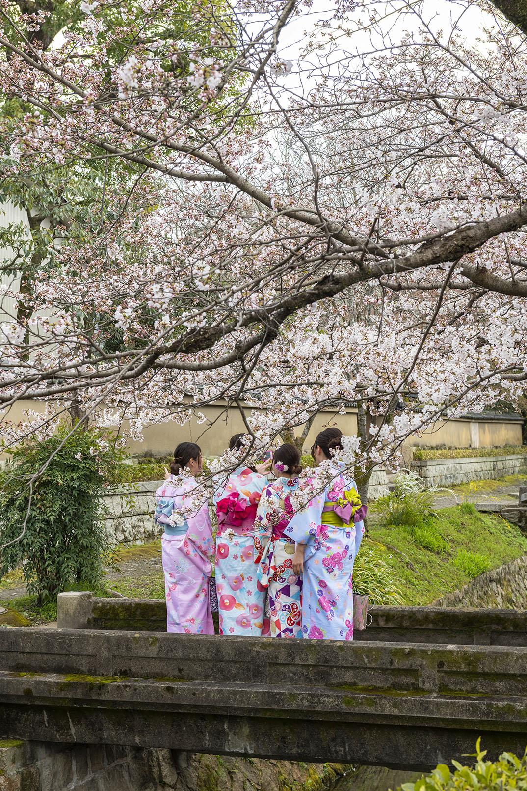 philosophers-path-japan-cheery-blossom