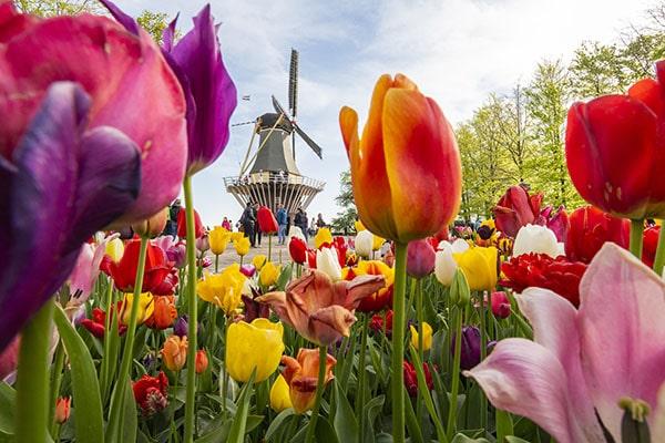 Dutch Tulips Workshop