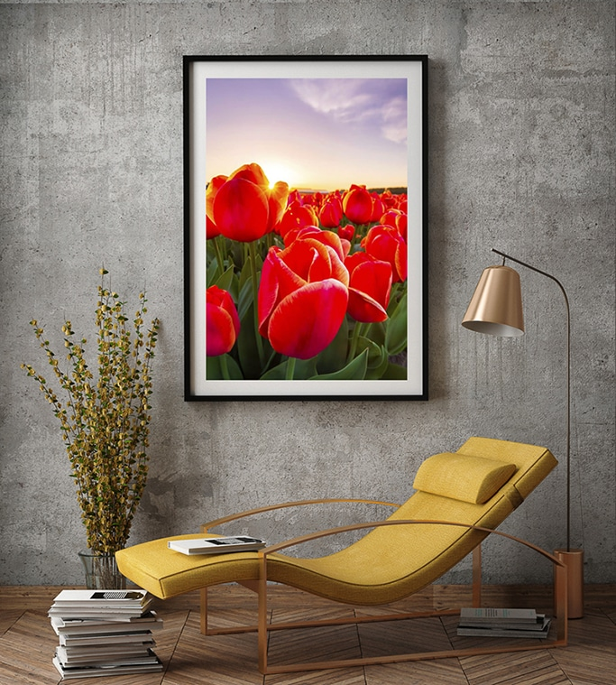 Tulip Fields of Holland