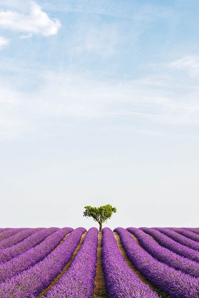 Lavender fields in Provence France - Photography Guide to France