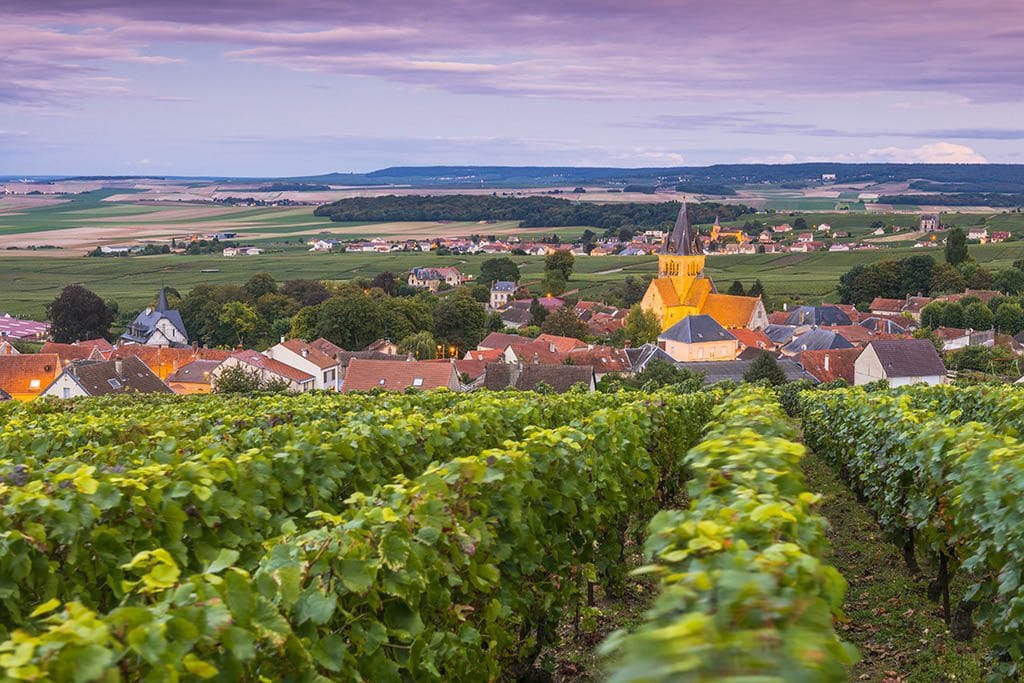 vineyards Photography Guide to France