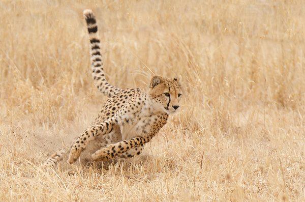 Tanzania_Photo_Tour