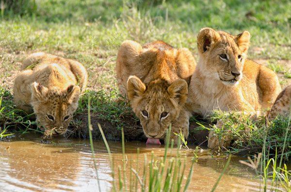 Tanzania_Wildlife_Photography_Holiday