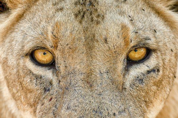 Tanzania_Wildlife_Photography_Tour