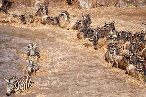 Wildlife_Photography_Tour_Tanzania