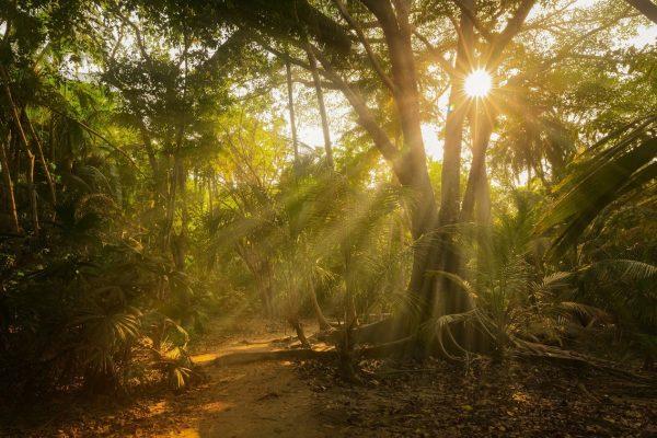 parque-tayrona-bosque-humedo-magdalena-colombia