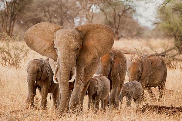 Tanzania Photo Tour